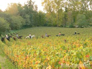 Free wallpaper about our wine tasting horse riding trail in Bordeaux vineyards in France - Ride in France