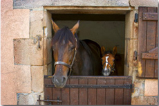 Horse riding stay in Auvergne with Castle accommodation - Ride in France