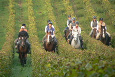RIDE IN FRANCE - Ride in Bordeaux vineyards