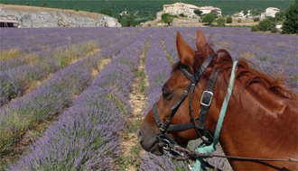 A fast gallop in the vineyards of Provence - Ride in France