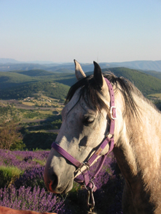 Horseback ride in Haute Provence - Ride in France