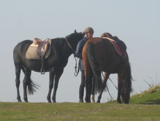 RIDE IN FRANCE - Horses on the grasslands