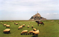 RIDE IN FRANCE - Horse, Mont Saint Michel and salted meadows sheep