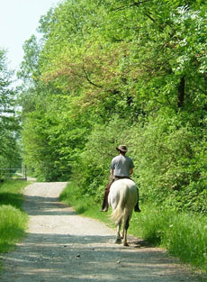 Trail riding in high mountain pastures - Ride in France