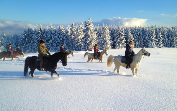 Riding horse in snow